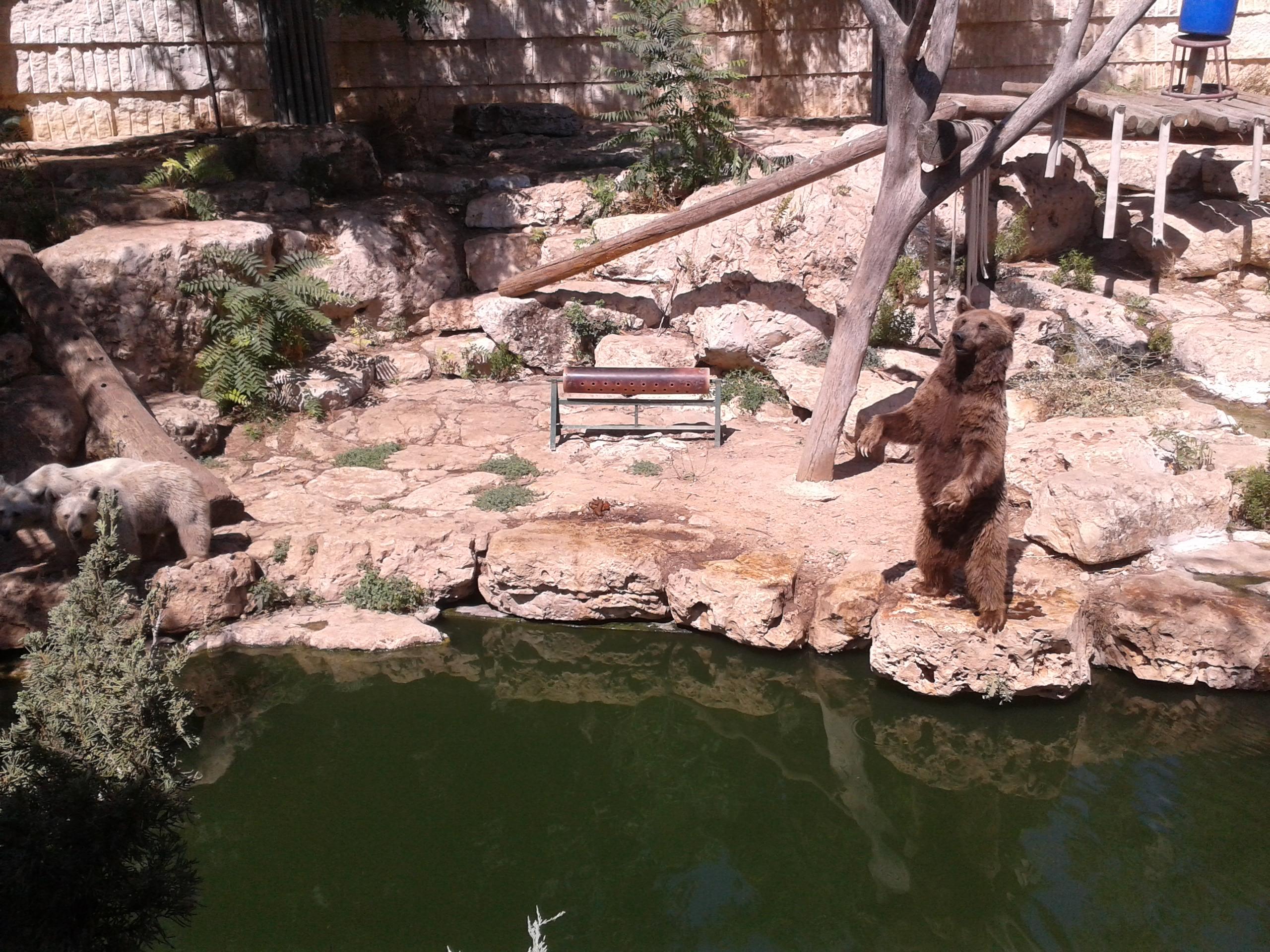 Библейский иерусалимский зоопарк или, как красив этот мир