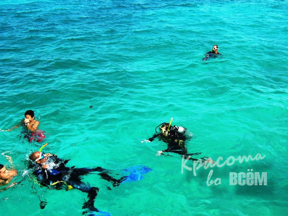 Египет. Красное море. Дайверы в море.