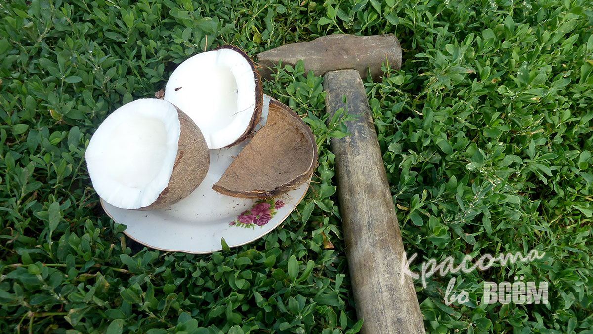 Кокосовое масло для красоты волос. Разбиваем кокос молотком.